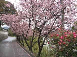 IMG_0685.jpg桜